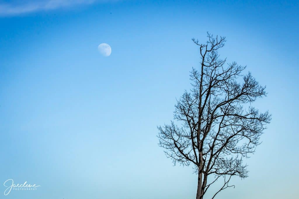 Moon and tree two